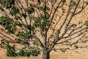 Why You Need To Hire An Arborist To Prune Young Trees