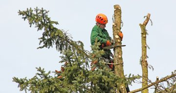 Tree Pruning Forest Lake