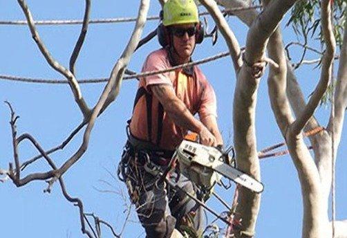 1 Arborist